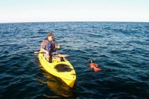 kayak fish shark