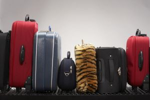 Various suitcases on conveyor belt